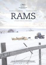 Plakat filmu Barany. Islandzka opowieść